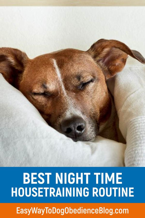 Best Night Time Housetraining Routine Easy Way To Dog Obedience Blog House Training Dog Obedience Dogs