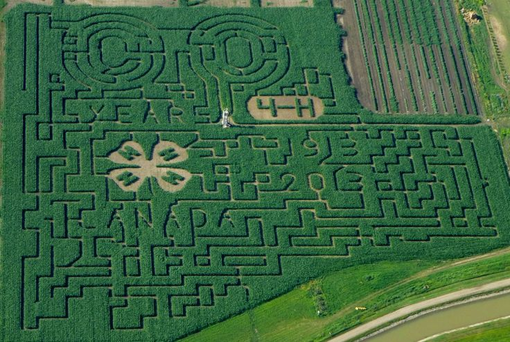An Amazing Maze of Maize in Lethbridge, Alberta