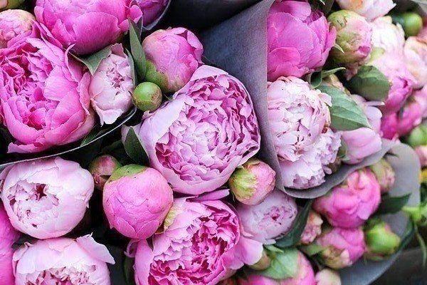 ...получать цветы без повода