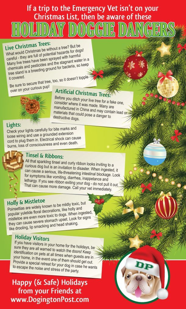Here are some common household dangers to be aware of this holiday