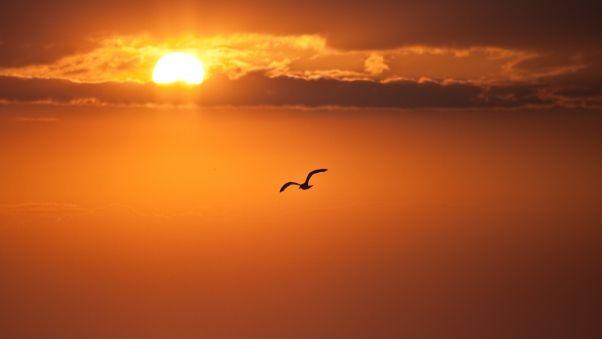 Обои закат, оранжевый, солнце, диск, птица, полет, свобода