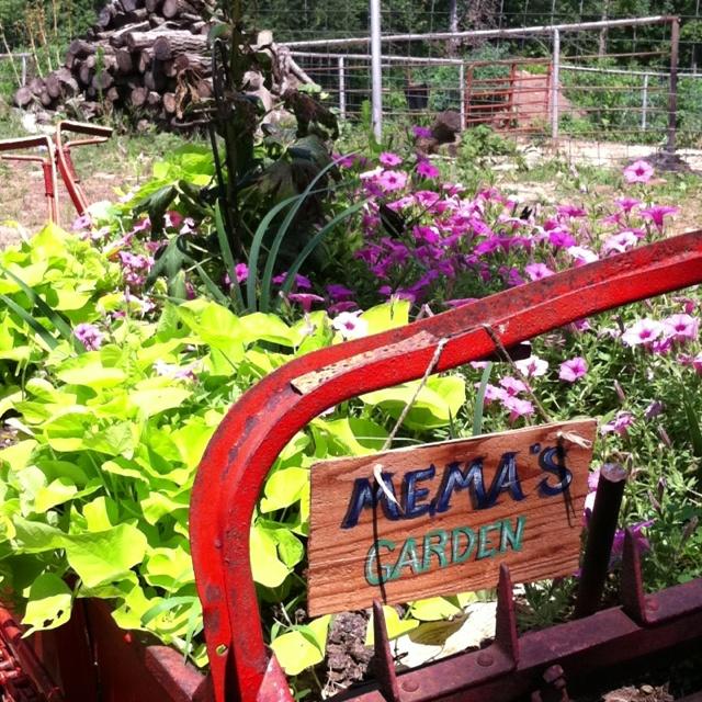 Memaw's garden in a manure spreader :)