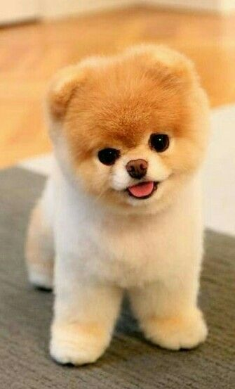 Too cute!  What breed is this?