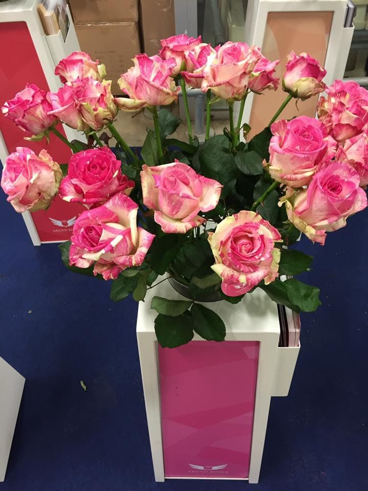 Rose Freaky Avalanche+ (Arend Roses)