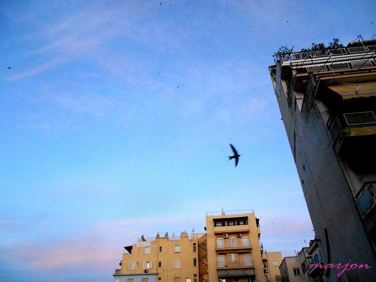 Bird in a big city