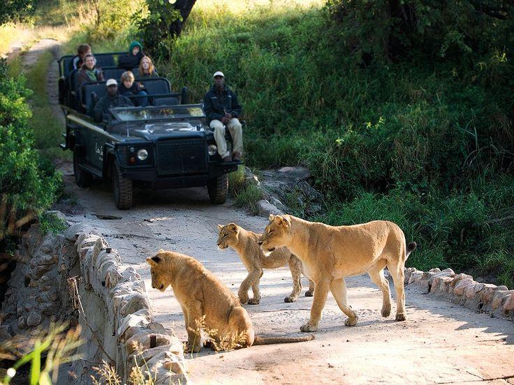 Unique viewing inside Kruger park