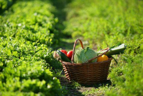 Replantando legumes e verduras
