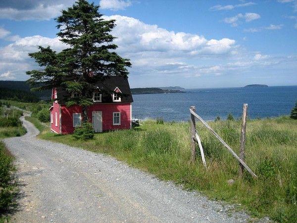 Tiny in Newfoundland