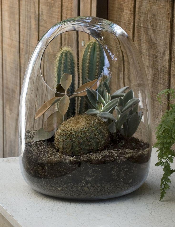 Mini jardín cactáceo