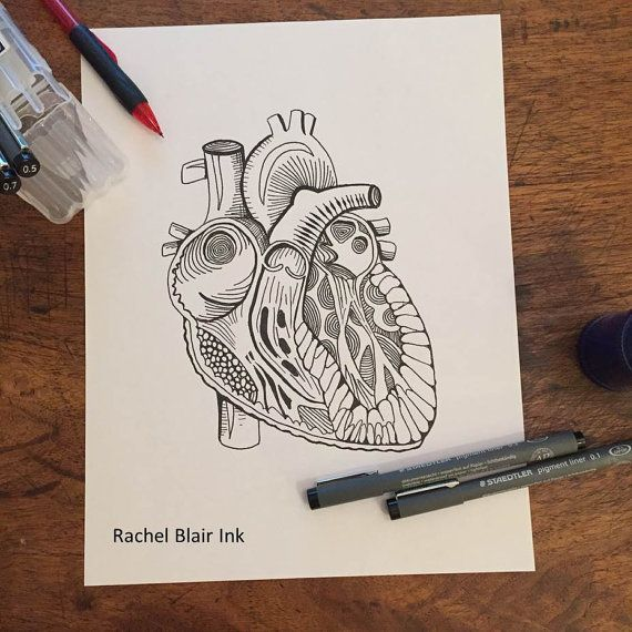 adult coloring page heart anatomy - Yoga Anatomy Coloring Book