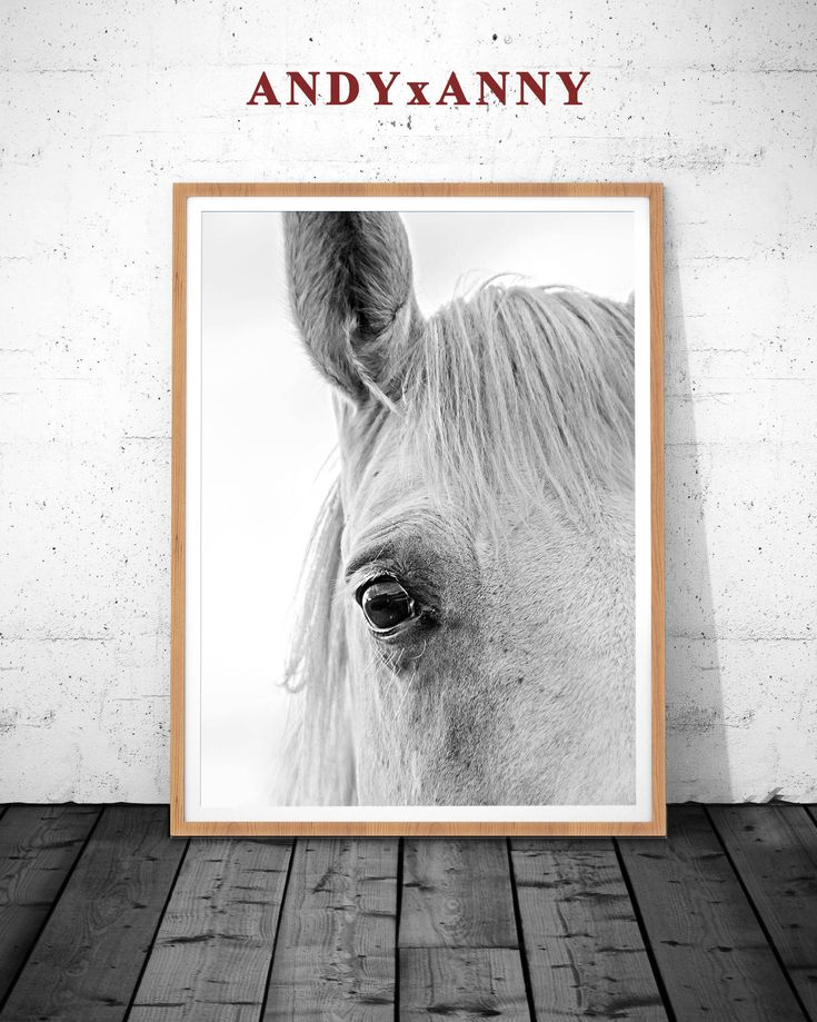 Wall Art Black Horse : Best ideas about horse wall art on pretty