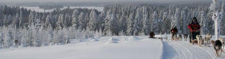 Saija Lodge - Winter holiday packages, husky adventure, winter dream, christmas, new year