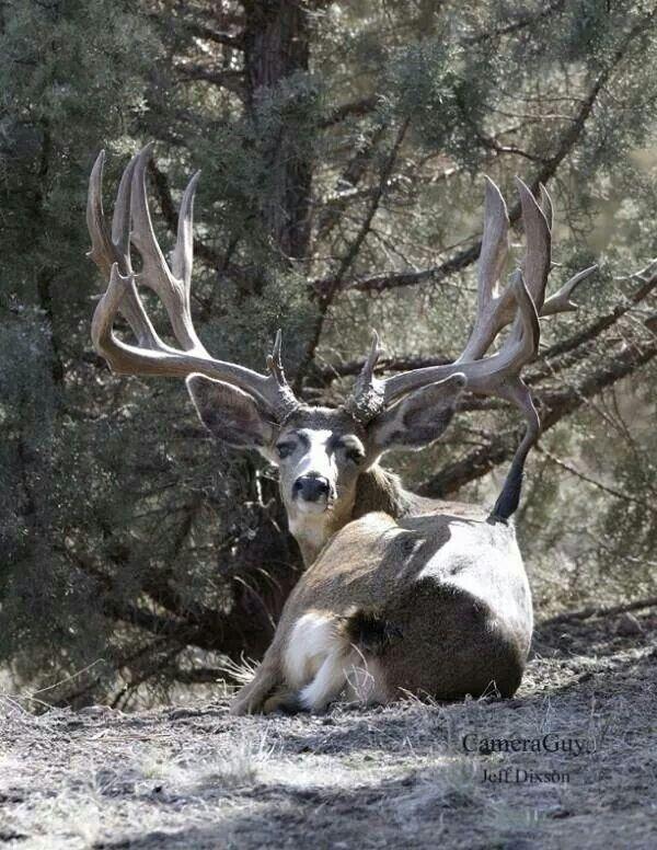 Beautiful Buck!