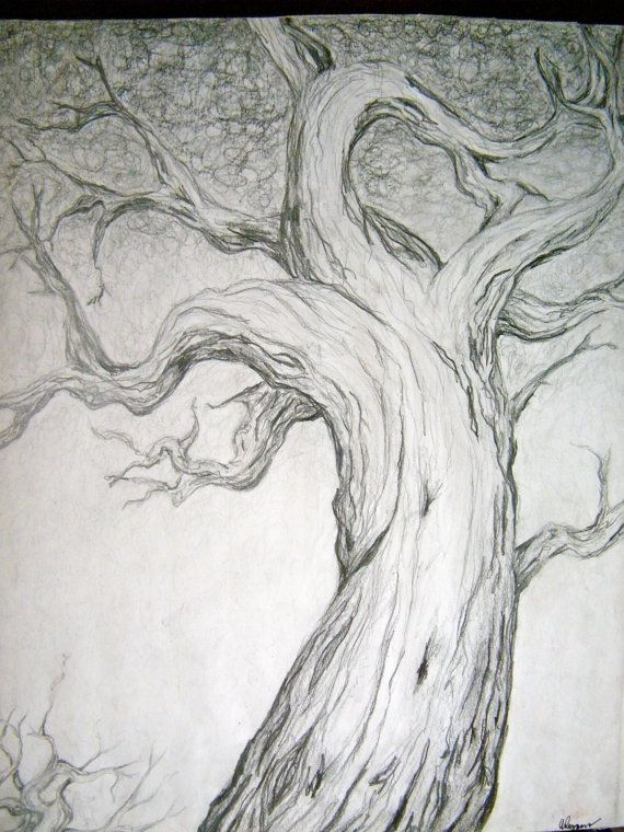Beautiful pencil drawing-makes me want to take up art again
