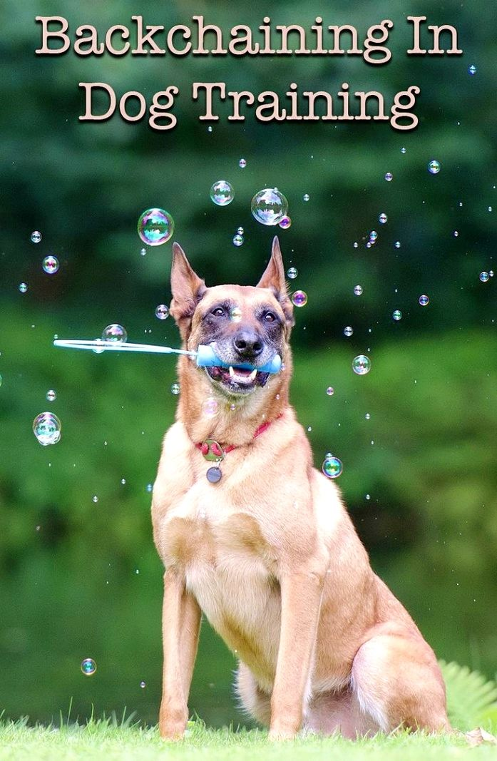 Dog Training Ideas It Is Very Simple To Teach A Pooch To Roll