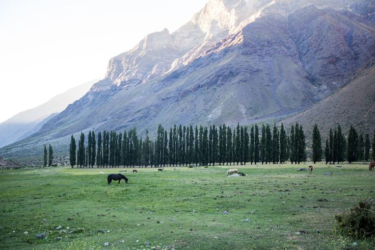 Andes Mountains in a Remote Area Miles Outside of San Jose De Maipo, Chile with tall trees and horse at base