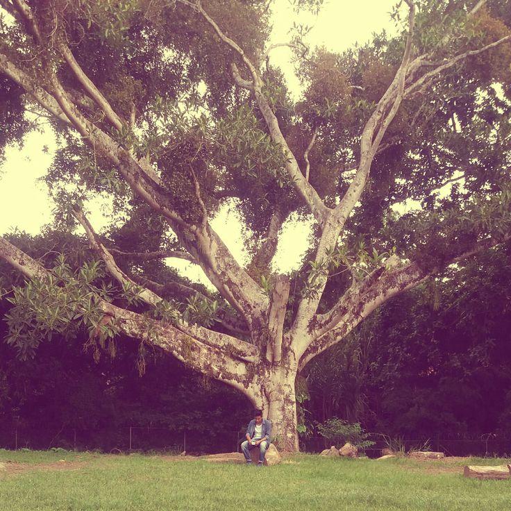 Porque será como el árbol plantado junto a las aguas, que junto a la corriente echará sus raíces, y no verá cuando viene el calor, sino que su hoja estará verde; y en el año de sequía no se fatigará, ni dejará de dar fruto. JEREMIAS 17:8