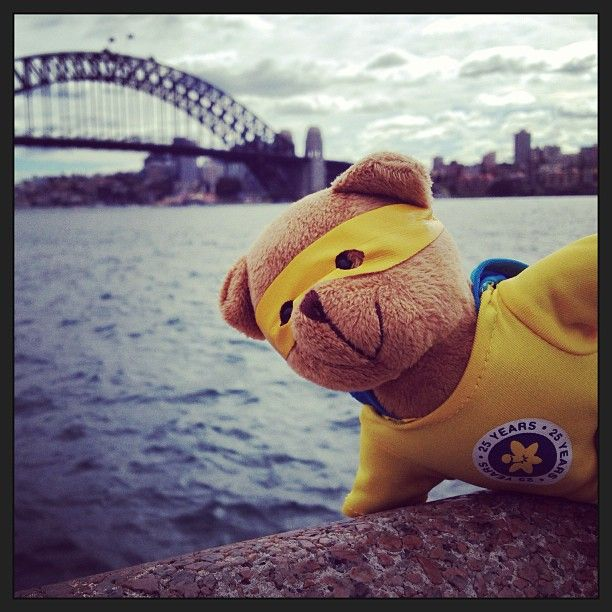 Here's the one and only #cancercouncilbear Dougal! He's spreading #hope right across #Australia for #cancercouncilnsw #daffodilday #bear #toy #cute