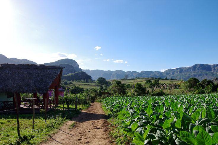ビニャーレス渓谷 | キューバの世界遺産