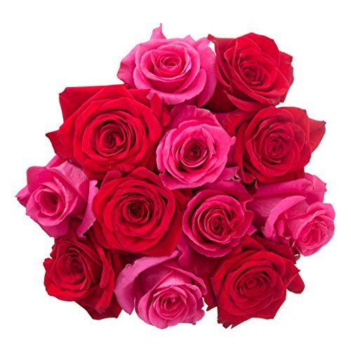 nice Flowers for delivery on Amazon PICKER UPPER Bouquet 12 Fresh Roses (Red/Hot Pink) Delivered with Free Flower Food Packet. Long Stem Roses. Guaranteed Best Flower Gift for Birthday, Valentines, Mothers