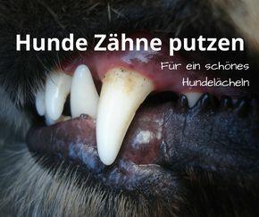 Wie putzen Sie Ihrem Hunde die Zähne? Hier finden Sie eine Anleitung zum Zähneputzen bei Hunden, sodass Zahnstein und Beläge nicht vom Tierarzt behandelt werden müssen.