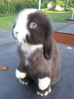 Bunny Rabbit On It's Hind-legs... My mum says this bunny belongs on the chess team...hahahahah!