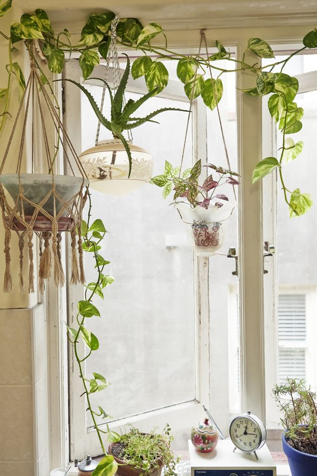 Make hanging planters from pendant lights!