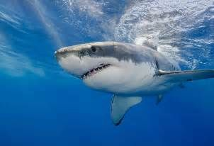 Facts about Sharks ~ .