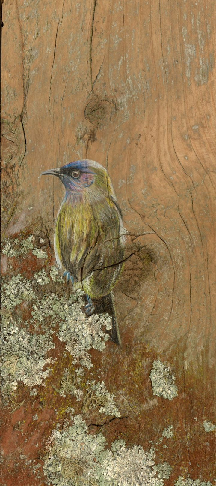 Rustic Portraits of New Zealand Birds Drawn on Recycled Timber - My Modern Met