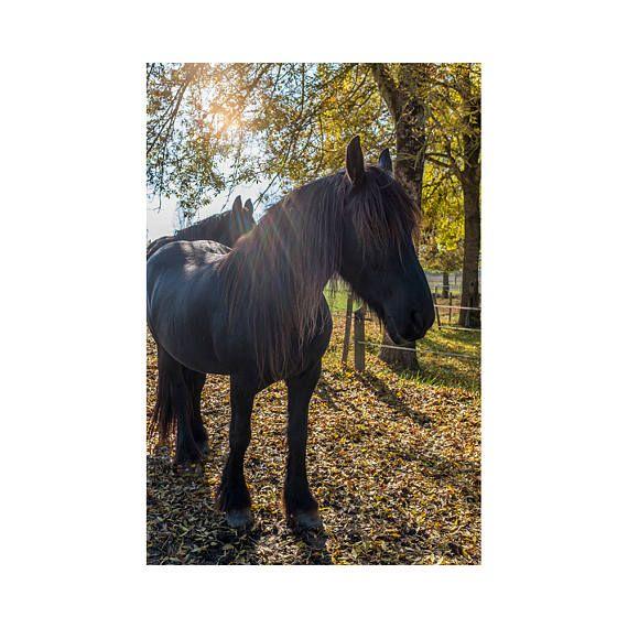 25 Best Ideas About Horse Wall Art On Pinterest Pretty