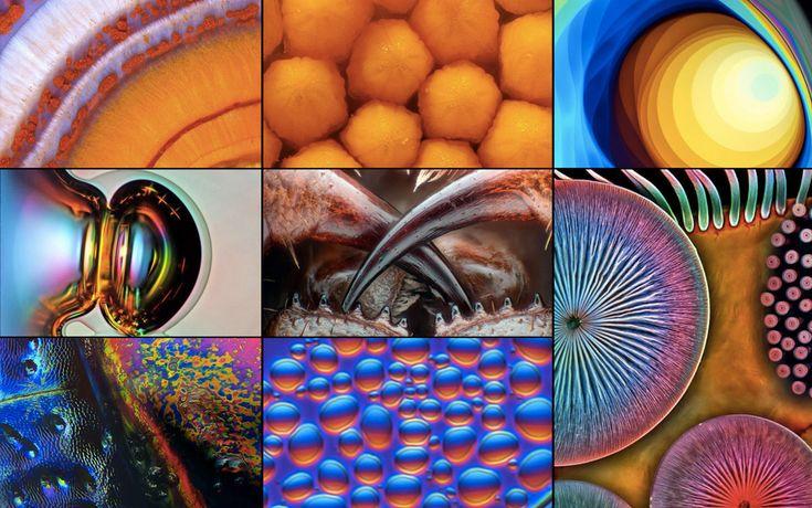 """15 FOTOS QUE REVELAN LA MARAVILLA DE LO PEQUEÑO Selección del concurso de fotografía microscópica """"NIKON Pequeños Mundos""""."""
