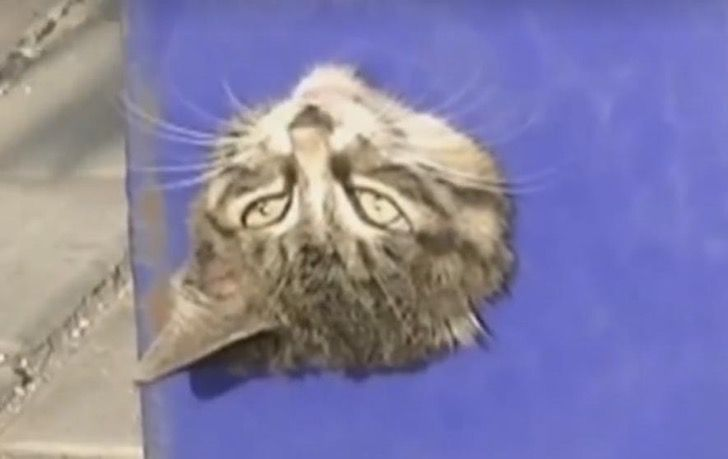 Este gato se encontró en una situación muy incómoda y es aterrador imaginar cómo salió de ahí