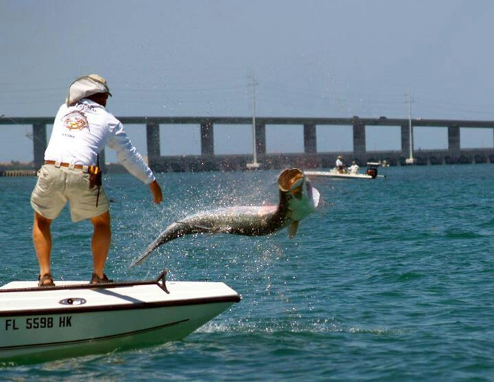 Tarpon fishing florida keys pocketranger for Florida tarpon fishing
