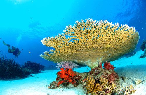 Thailand   Best Places to Dive: Similan Islands, Surin Islands, Koh Phi Phi, Koh Tao