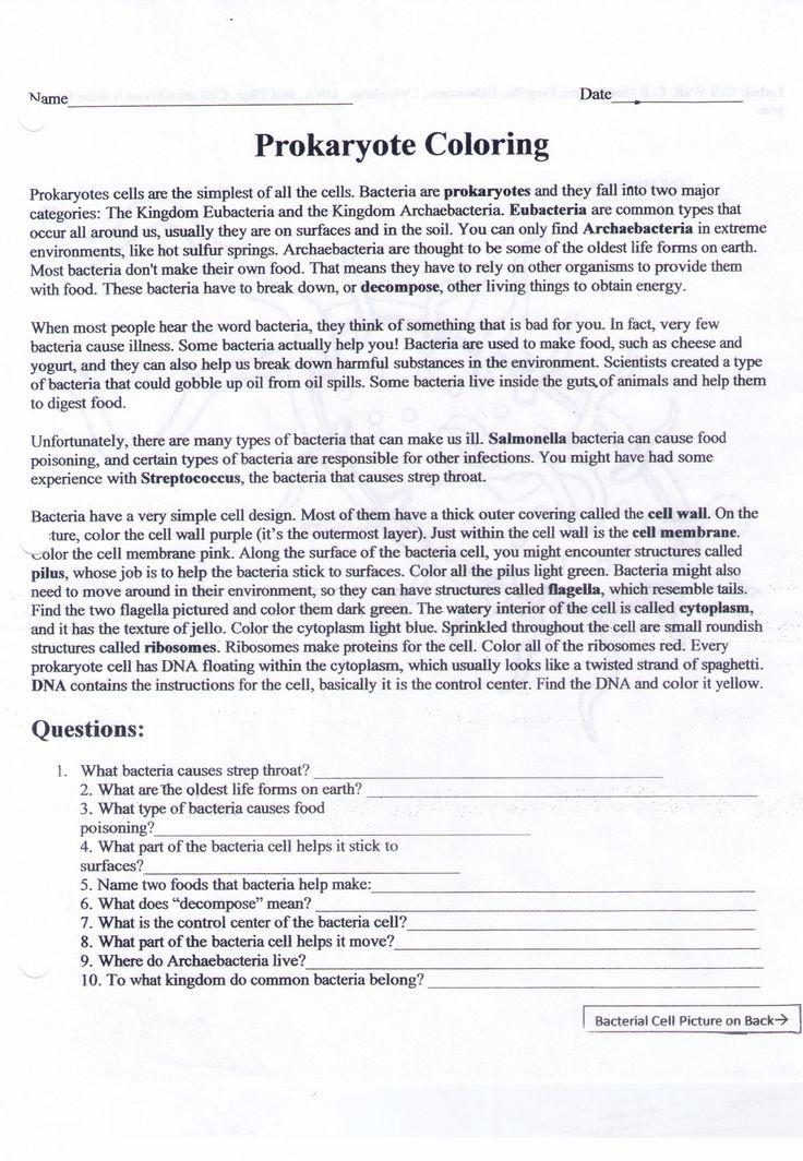 Amoeba Sisters Classification Worksheet Adams Amelia ...