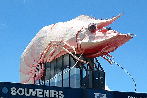 You'll find the Big Prawn on a rooftop in West Ballina, New South Wales.