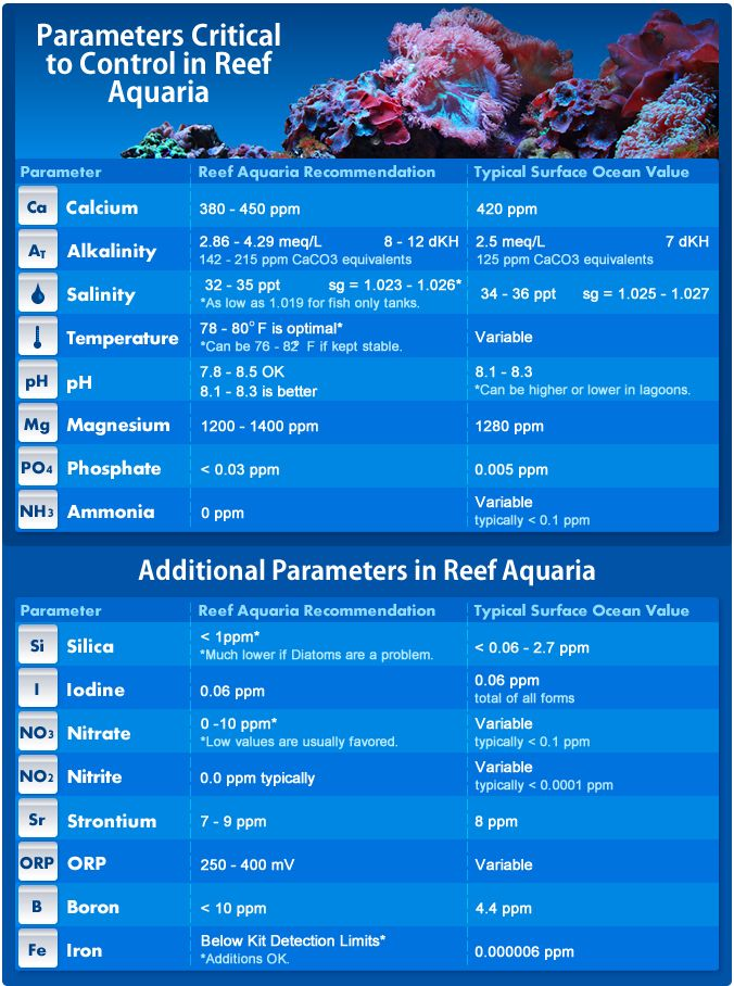 Maintaining proper reef tank parameters is essential to the health and well-being of fish, coral and invertebrate inside your aquarium. Fluctuations in a key aquarium parameter, such as temperature, ammonia or nitrate, can result in algae blooms, animal sickness and even death. It is therefore necessary to routinely test an important tank parameter like salinity …