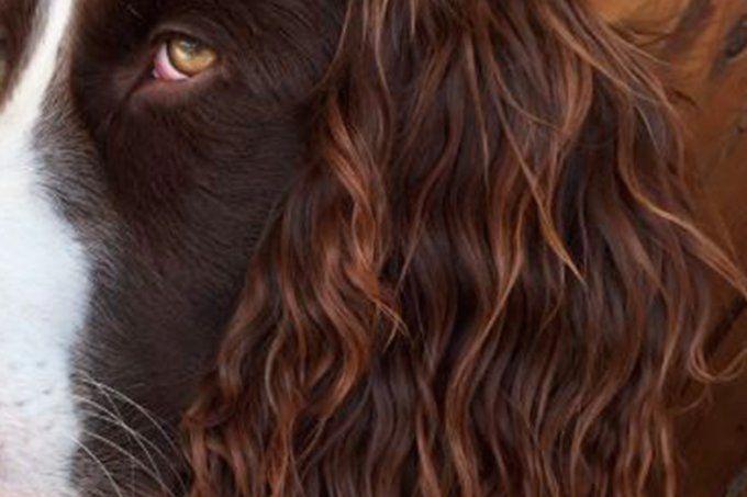 Você vai querer ter os cabelos iguais aos pelos deste cachorro!!