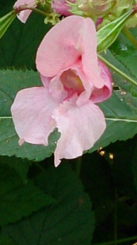 Wilde Orchidee entdeckt...