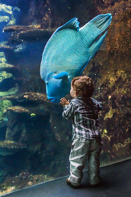 Young boy and Humphead wrasse (Cheilinus undulatus) - Nausicaa aquarium, Boulogne Sur Mer, France - www.gdecooman.fr portfolio, cours et stages photo à Lille, visites guidées de Lille.