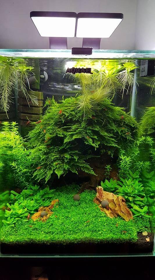 Houseplants In Bottles: How To Grow Plants In Water   Indoor