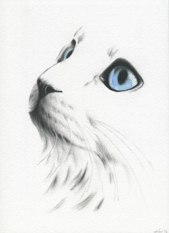 White Cat with blue eyes, Cat Sketch, Charcoal Cat Drawing, ORIGINAL White Cat Sketch 8″×10″, Charcoal Sketch, Cat Drawing