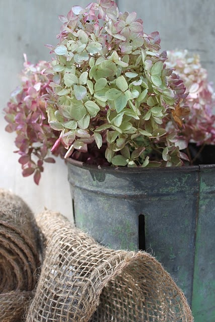 Hydrangeas & galvanized buckets <3:
