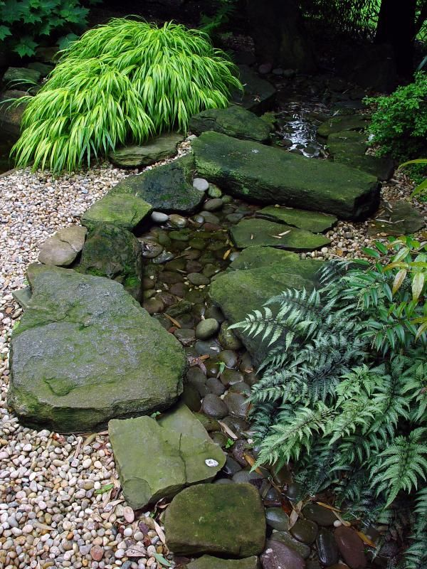 Hakonechloa Grass and Japanese Painted Fern beside a stream at Old Westbury Gardens, Long Island, N.Y.
