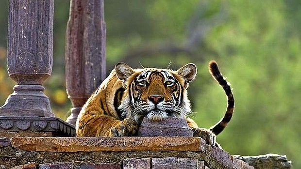 Ranthambore National Park, Rajasthan.
