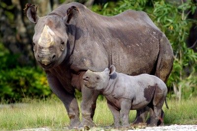 Animals+That+Are+Endangered+|+Endangered+Animals+Facts+|+Top+7+Critically+Endangered+Animals