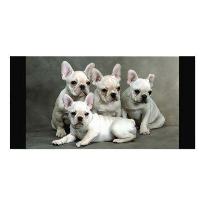 #Cute French Bulldog Puppies Card - #Petgifts #Pet #Gifts #giftideas #giftidea #petlovers