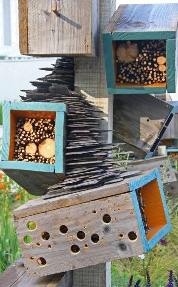 90 besten insekten bilder auf pinterest insekten biene. Black Bedroom Furniture Sets. Home Design Ideas
