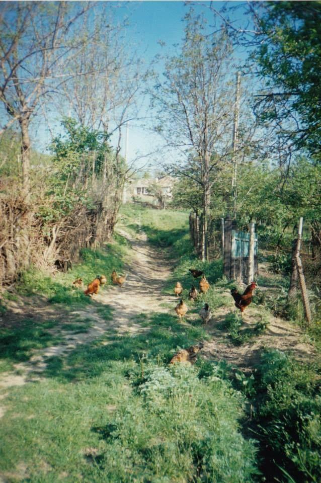 Cu găinile la păscut
