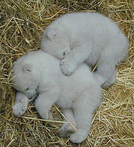 lindabocar uploaded this image to 'ANIMALS'.  See the album on Photobucket.
